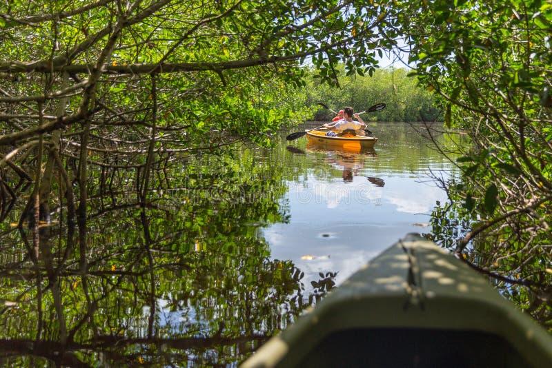 EVERGLADES, FLORIDA, USA - AUGUST 31: Tourist kayaking in mangro. Ve forest on August 31, 2014 in Everglades, Florida, USA royalty free stock photo
