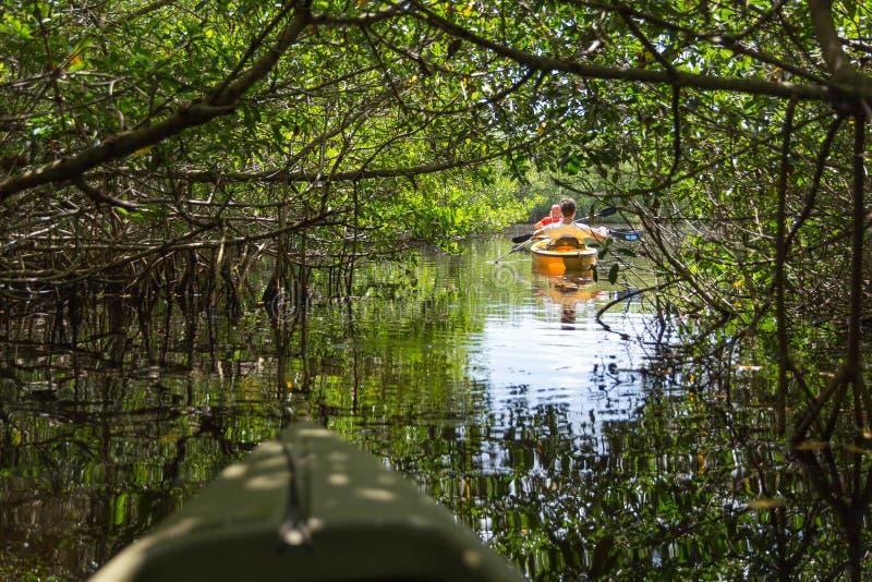EVERGLADES, FLORIDA, USA - AUGUST 31: Tourist kayaking in mangro. Ve forest on August 31, 2014 in Everglades, Florida, USA stock photography