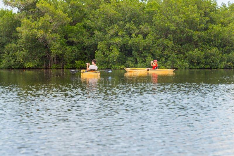 EVERGLADES, FLORIDA, USA - AUGUST 31: Tourist kayaking in mangro. Ve forest on August 31, 2014 in Everglades, Florida, USA stock photos