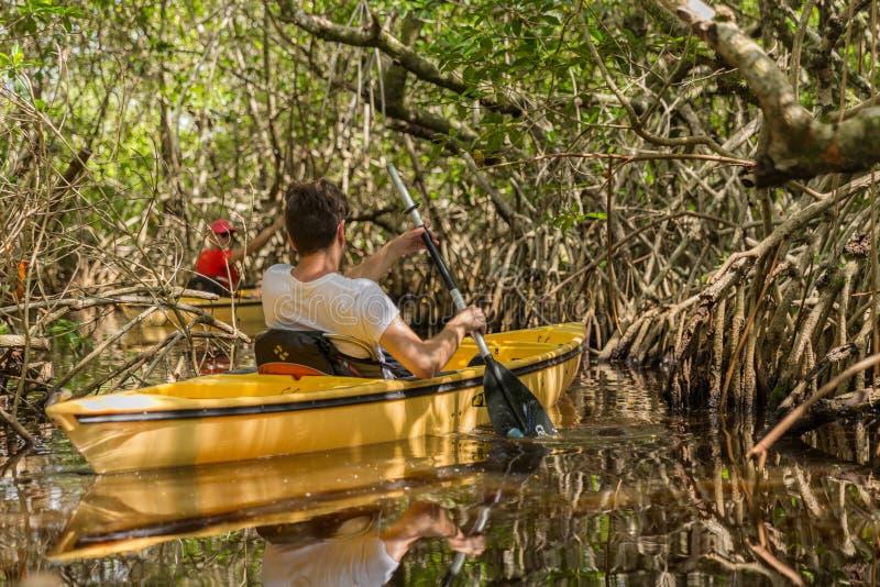 EVERGLADES, FLORIDA, USA - AUGUST 31: Tourist kayaking in mangro. Ve forest on August 31, 2014 in Everglades, Florida, USA royalty free stock images