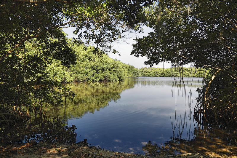 Download Everglades Lake stock photo. Image of creole, bayou, forest - 14085928