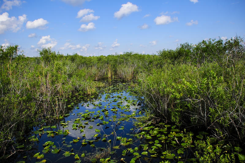 Everglades Nationaal Park royalty-vrije stock afbeelding