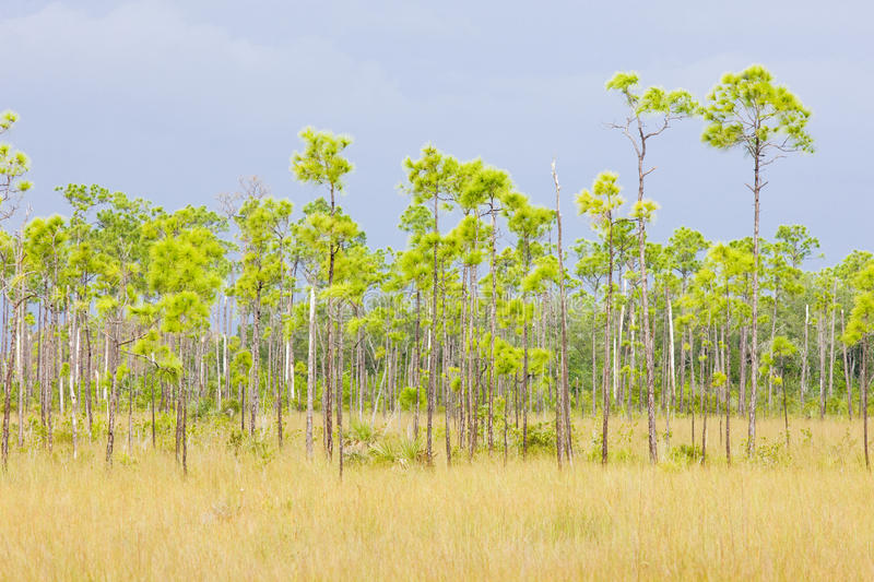 Everglades National Park. In Florida, USA royalty free stock image