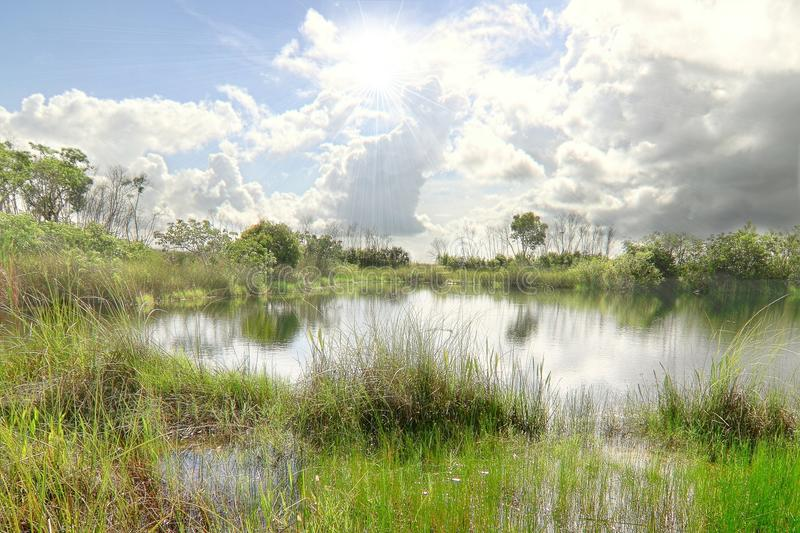 Everglades National Park. Beautiful landscape in the Florida Everglades National Park stock images
