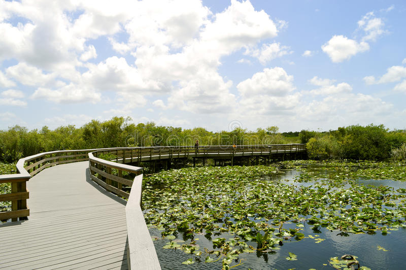 Everglades National Park. Anhinga Trail through the Everglades National Park in Florida stock photo