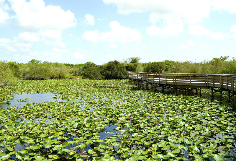 Everglades National Park. Anhinga Trail through the Everglades National Park in Florida stock image