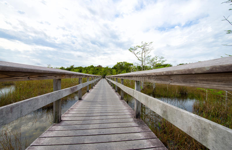 Everglades National Park, Florida. USA royalty free stock image