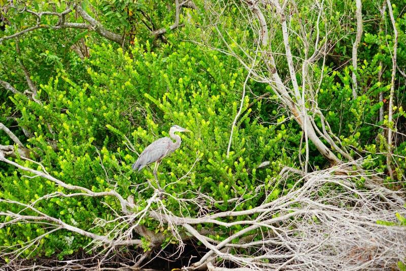 Everglades national park landscape royalty free stock photos