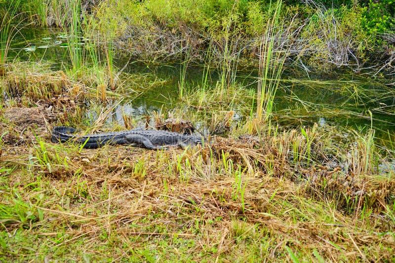 Everglades national park landscape stock photos