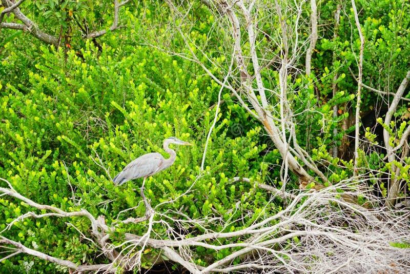 Everglades national park landscape stock images
