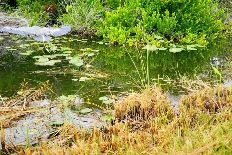 Everglades national park landscape royalty free stock image