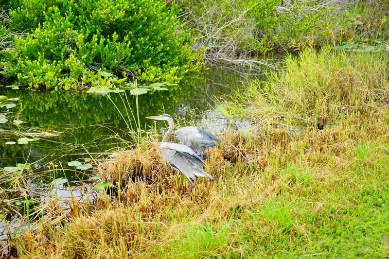 Everglades national park landscape royalty free stock photos