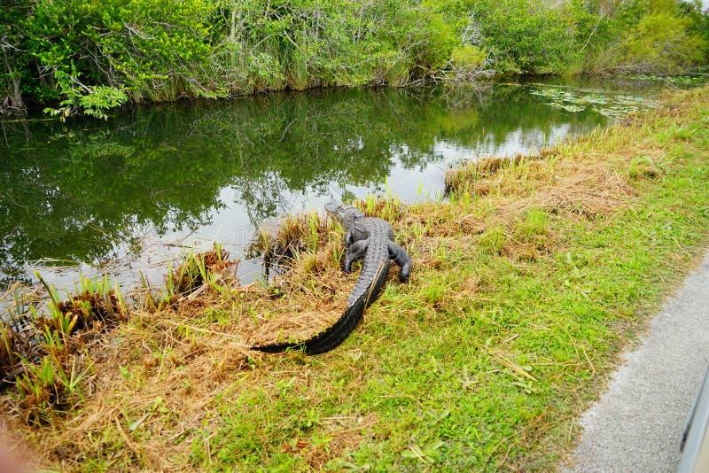 Everglades national park landscape stock image