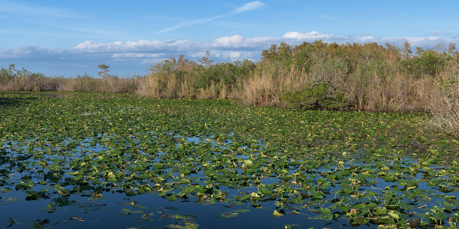 Everglades National Park pond royalty free stock photography