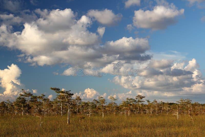 Everglades National Park stock image