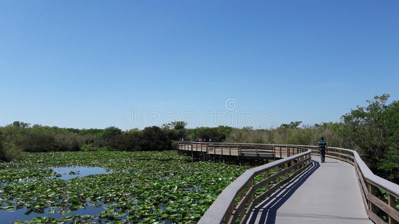 Everglades National Park. Walk through everglades National Park stock image