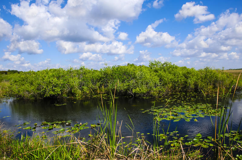 Everglades National Park. Wetlands in Everglades National Park, Florida stock image
