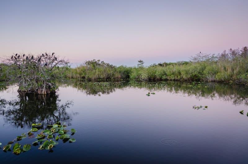 Everglades-Nationalpark lizenzfreies stockfoto