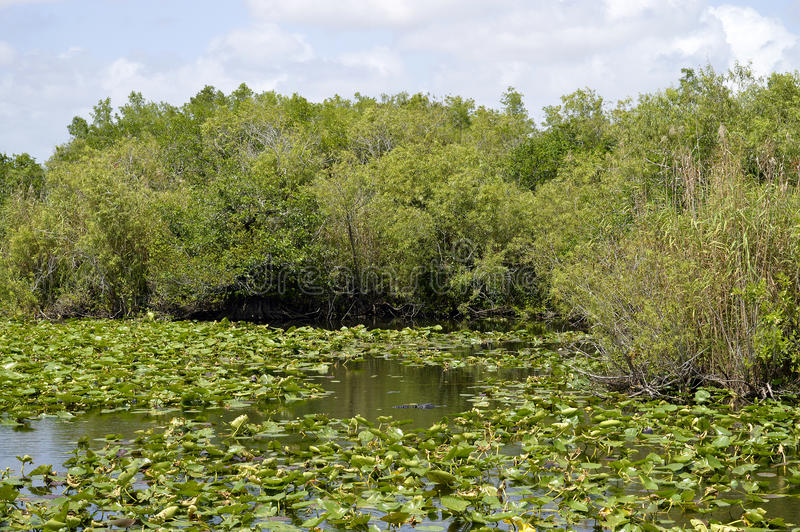 Everglades-Nationalpark stockfotos
