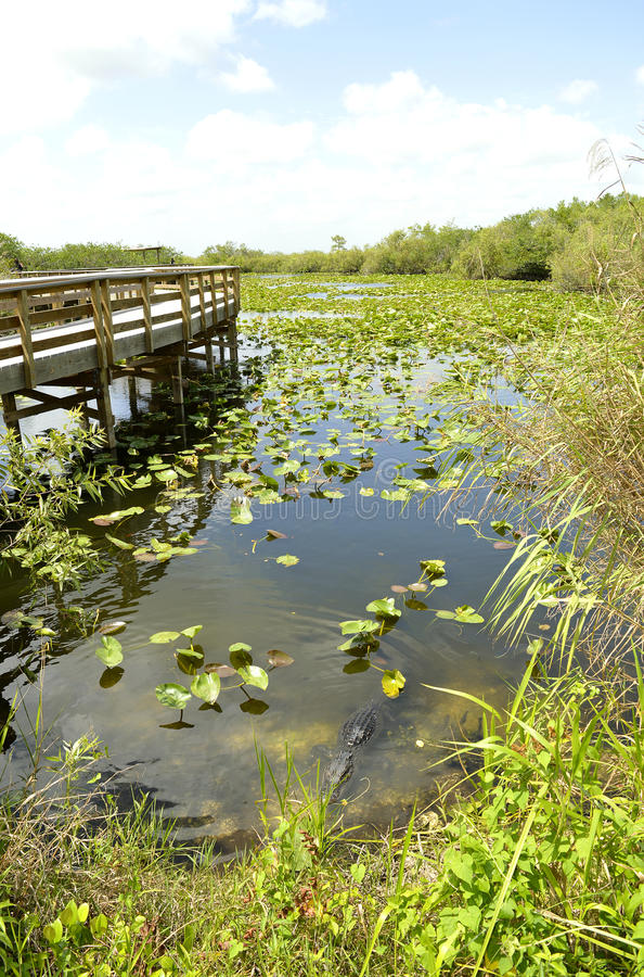 Everglades-Nationalpark lizenzfreies stockbild