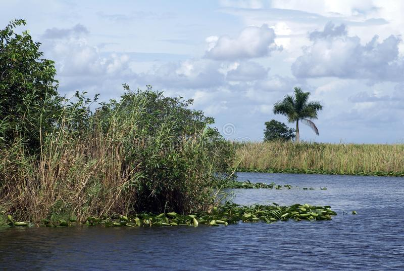 Everglades-Nationalpark, Florida, USA stockbild