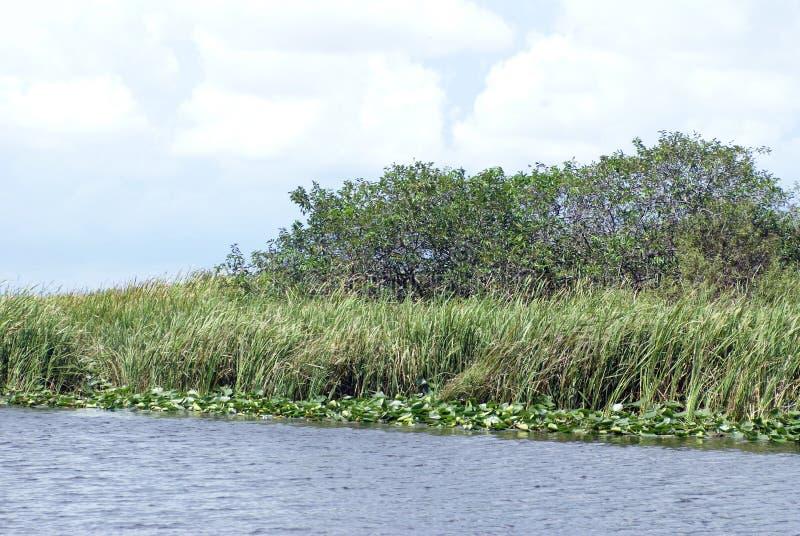 Everglades-Nationalpark, Florida, USA stockbilder