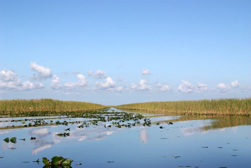 Download Everglades Pond stock image. Image of summer, plant, national - 16441173