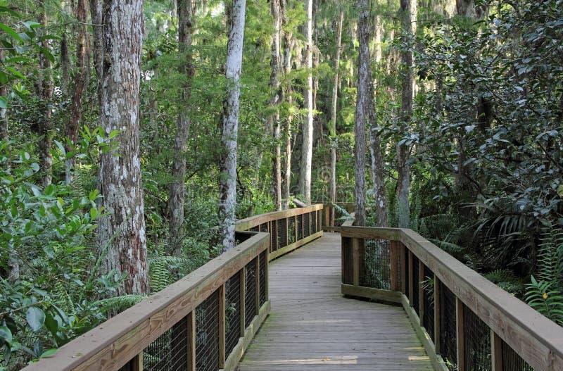 EvergladesCypress Swamp arkivbild