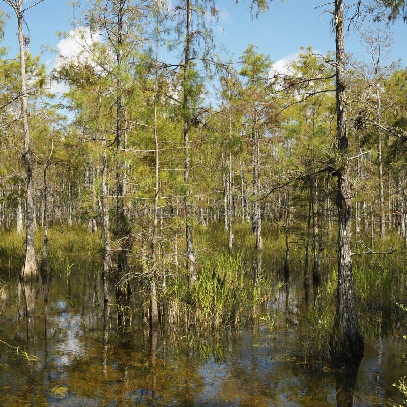 evergladesflorida våtmark arkivfoton