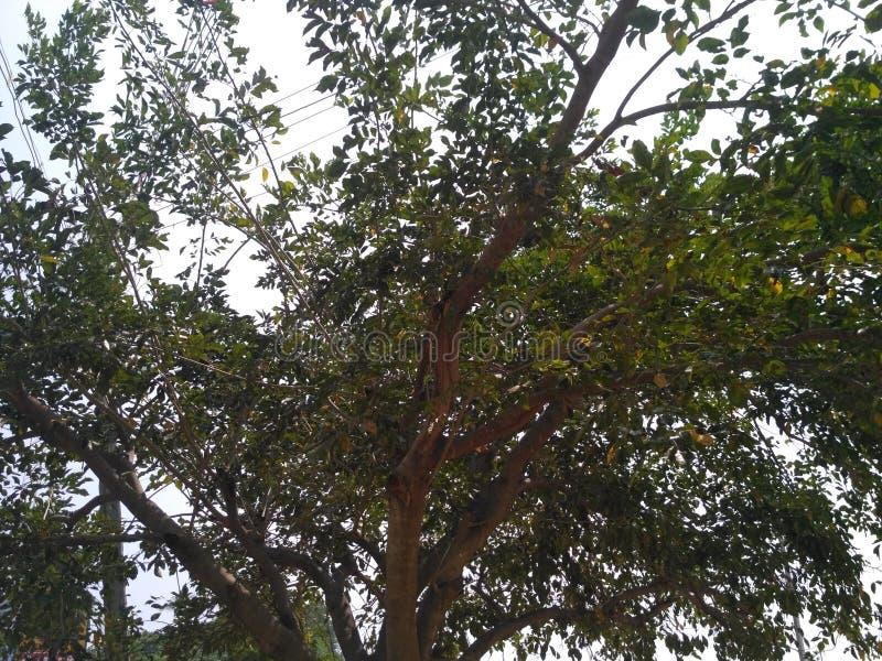 evergreen arkivfoto