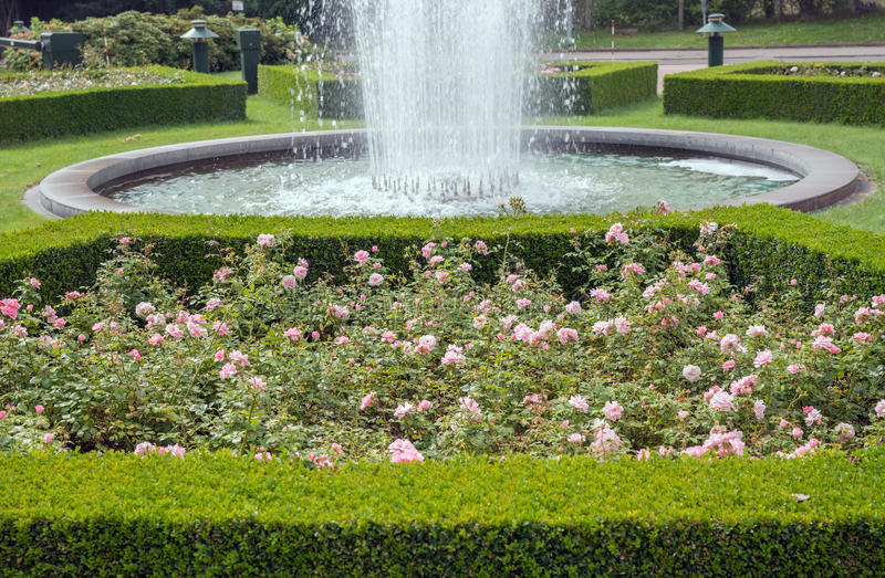 Evergreen boxwood hedge adorn a rose garden royalty free stock images