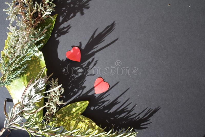 Evergreen branches frame with small little heart on black background, concept, st valentine day stock photos