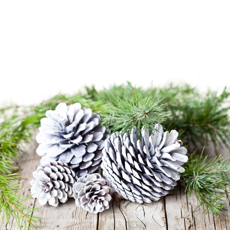 Evergreen fir tree branch and white pine cones. royalty free stock photos