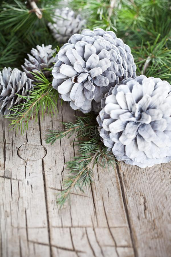 Evergreen fir tree branch and white pine cones closeup on wooden background stock photos