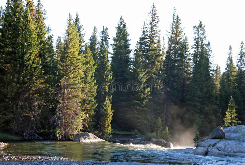 Evergreen forest on river bank stock photography