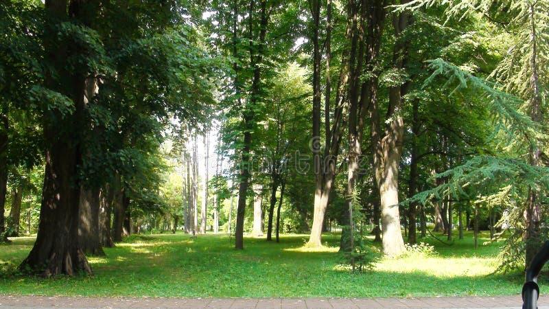Evergreen forset in Banja Koviljaca park, Serbia, sunny day in summer stock photography