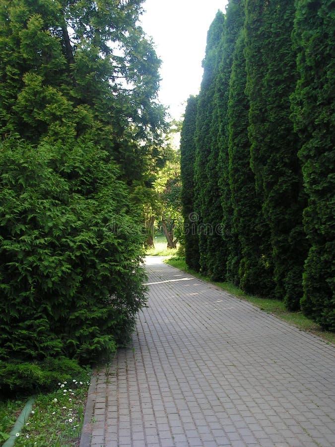 evergreen Landskapomr?de i str?larna av inst?llningssolen royaltyfria bilder