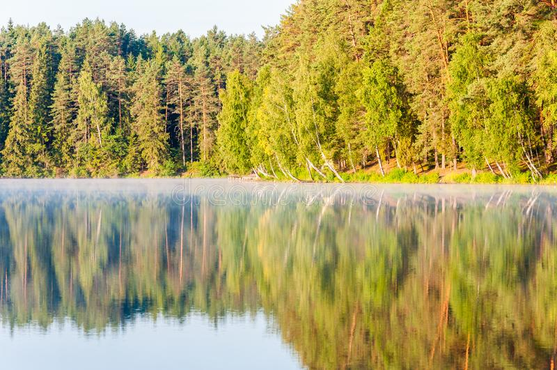 Evergreen pine and spruce conifer and birch also trees forest with its reflection on lake surface at sunrise royalty free stock photo