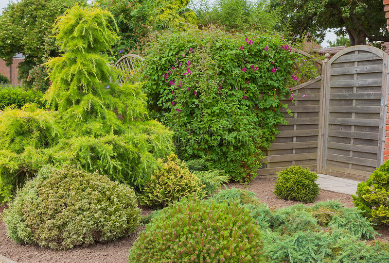 Evergreen Shrubs And Trees In A Garden Corner Stock Photo Image