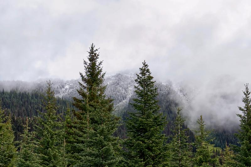 Evergreen spruce trees  and snow-capped forest peaks with white fog, Canadian Rocky Mountains royalty free stock photo