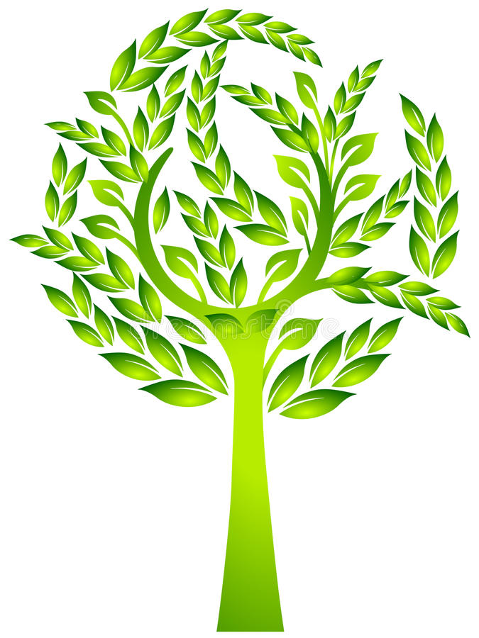 Download Evergreen tree stock vector. Image of spring, symbol - 12007288