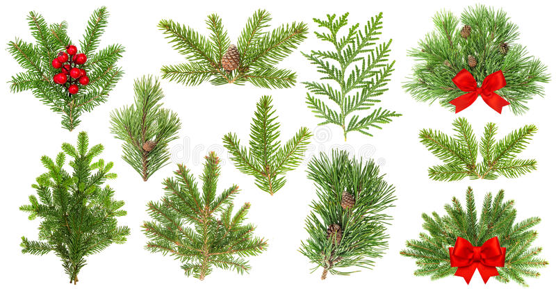 Evergreen tree branches. Christmas decoration red ribbon berries stock image