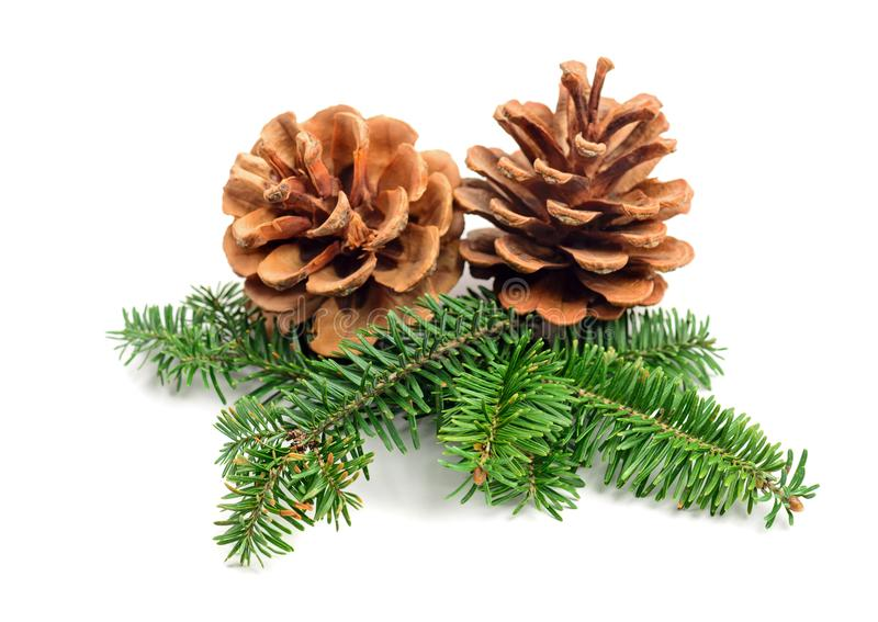 Evergreen tree Christmas pine cones royalty free stock photography