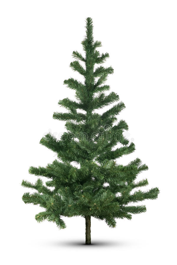 Evergreen tree on white stock photos