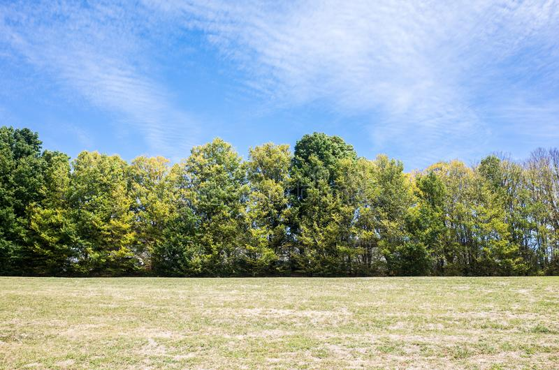 Evergreen trees by a green lawn. With a blue sky in the background royalty free stock photography