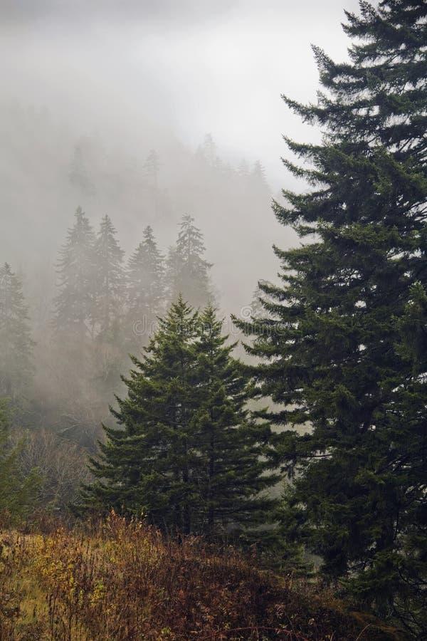 Evergreens, autunno, grandi montagne fumose fotografie stock libere da diritti