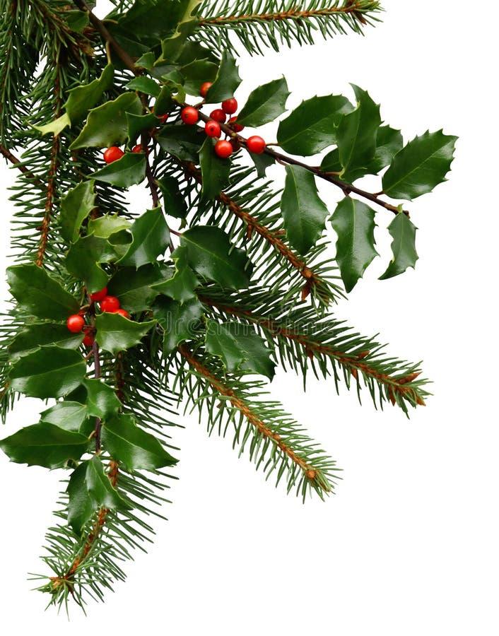 Evergreens do Natal imagens de stock royalty free