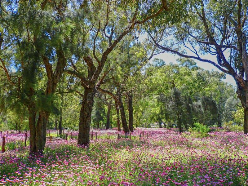 Everlastings del Park di re fotografie stock