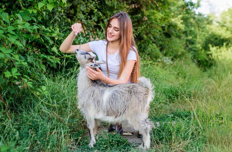 Every animal is different. woman vet feeding goat. farm and farming concept. Animals are our friends. happy girl love stock photos