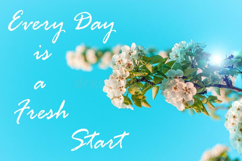 Wild Pear tree blossom. Horizontal banner with white flower on cyan color blurred backdrop.Spring nature card background. Every Day is a Fresh Start card. Wild stock image